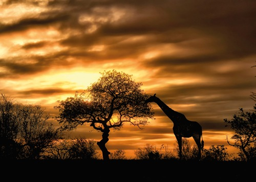 south-africa-biking-safari-giraffe