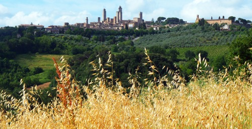 San-Gim-and-the-corn-field