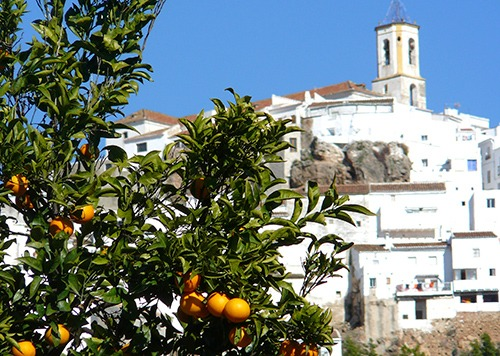 leisure-cycling-holiday-las-nieves