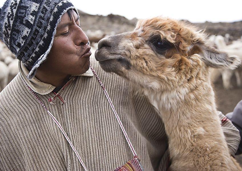 Meeting Alpacas.jpg - Peru - Andes, Amazon and Machu Picchu - Cycling Adventures