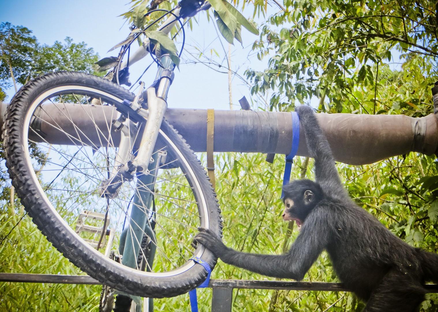 150424_Bike to Manu_46.jpg - Peru - Andes, Amazon and Machu Picchu - Cycling Adventures