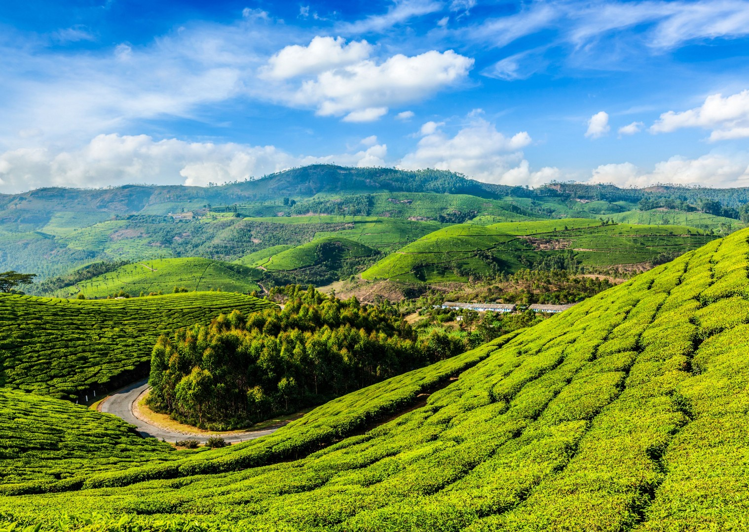 tea.jpg - India - Classic Kerala - Cycling Adventures