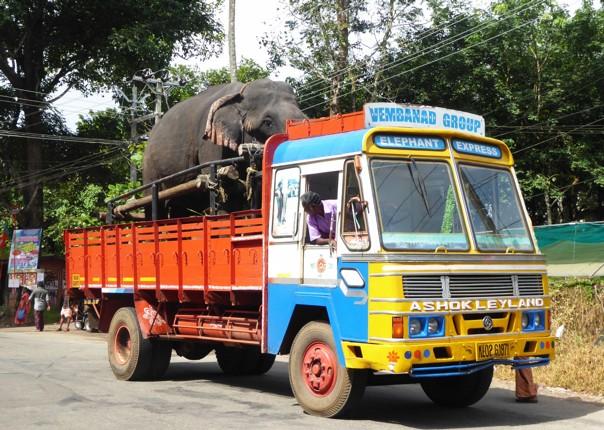 P1020297.JPG - India - Classic Kerala - Cycling Adventures