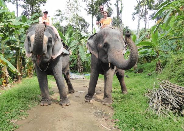 P1020105.JPG - India - Classic Kerala - Cycling Adventures