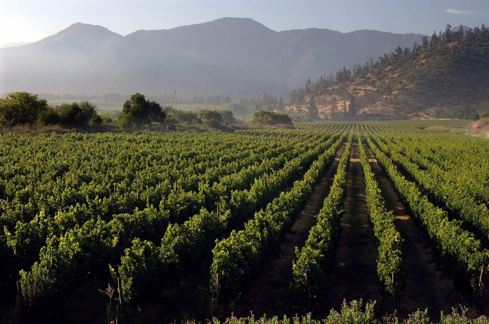 Tarapaca Chile Wine Cycling Tour 2.jpg - Chile - Wine Country - Cycling Adventures