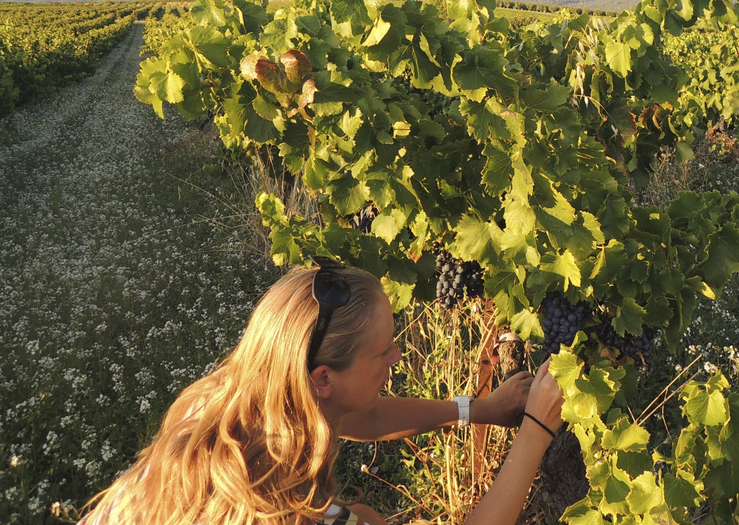 vineyards.jpg - Chile - Wine Country - Cycling Adventures