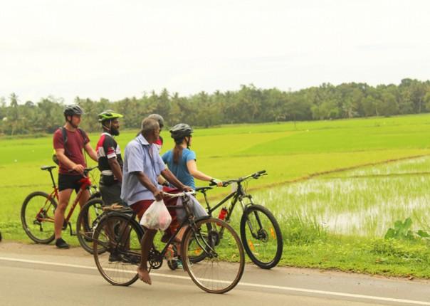 guided-group-cycling-in-sri-lanka-tea-plantations.jpg - Sri Lanka - Backroads and Beaches - Cycling Adventures
