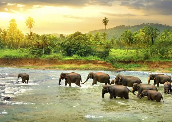 elephants-at-udawalwe-on-sri-lanka-cycling-adventure.jpg - Sri Lanka - Backroads and Beaches - Cycling Adventures