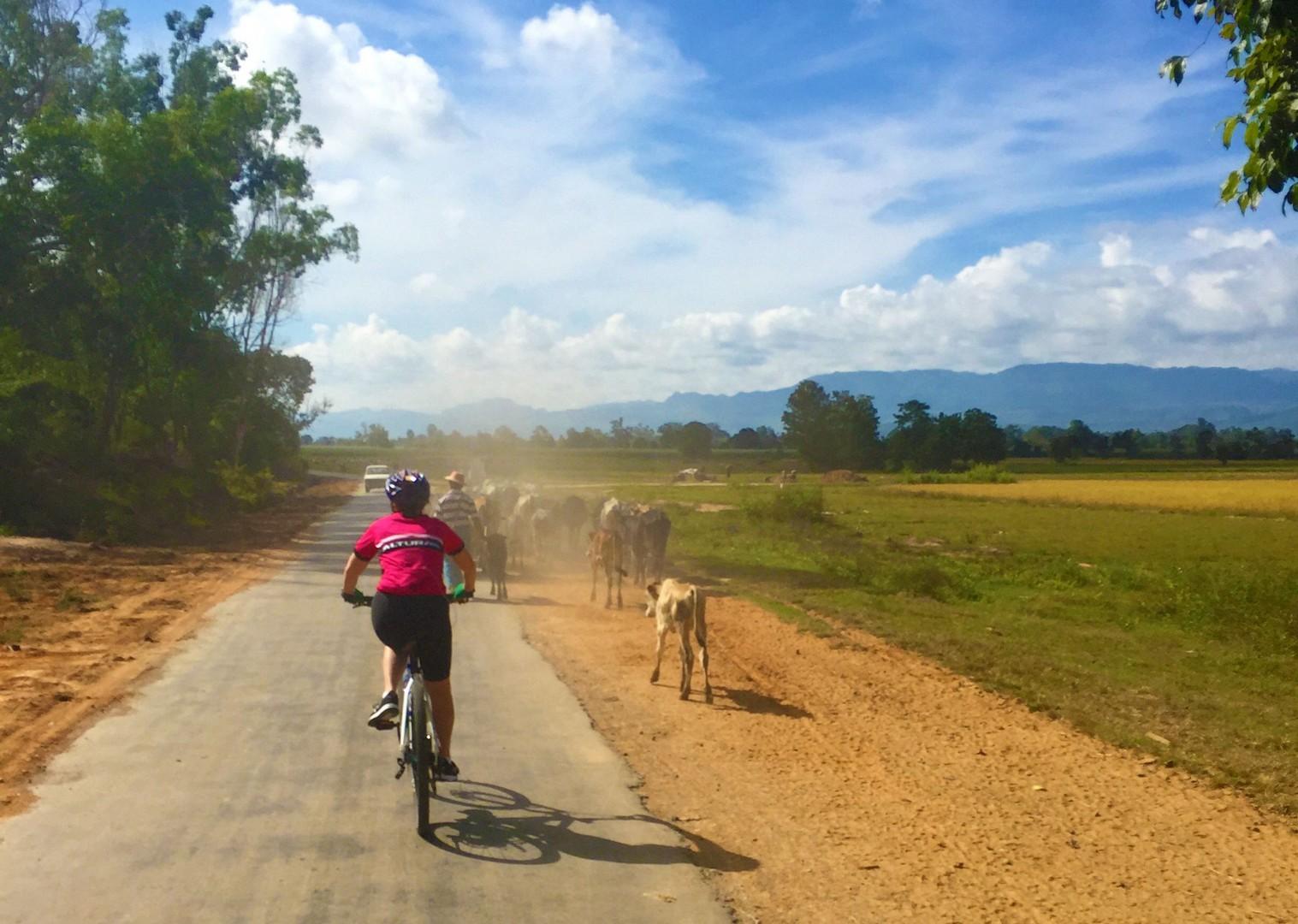 peaceful-group-cycling-countryside-burma.jpg - Myanmar (Burma) - Bagan and Beyond - Cycling Adventures