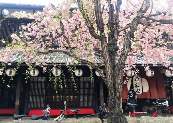 fuji-to-kyoto-cycling-adventure.JPG - Japan - Classic Japan - Fuji to Kyoto - Cycling Holiday - Cycling Adventures