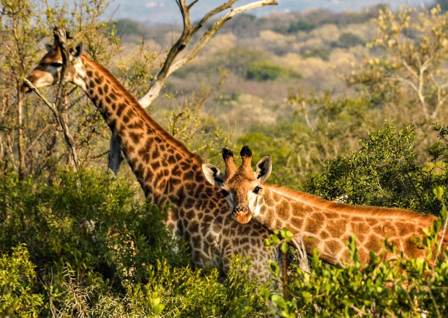 rgfdgfg14.jpg - Eswatini (Swaziland) - Cycling Safari - Cycling Adventures