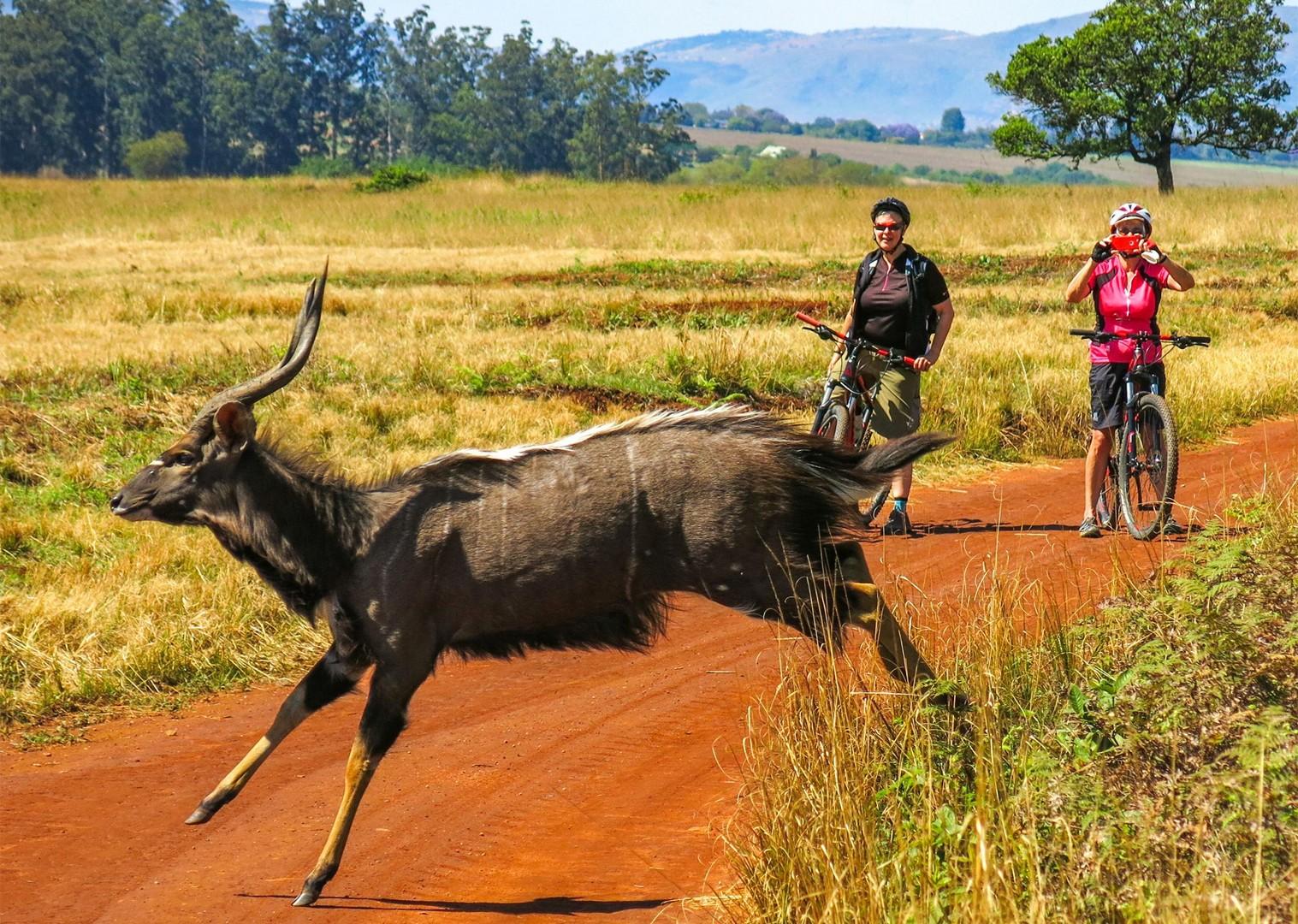 rgfdgfg15.jpg - Eswatini (Swaziland) - Cycling Safari - Cycling Adventures