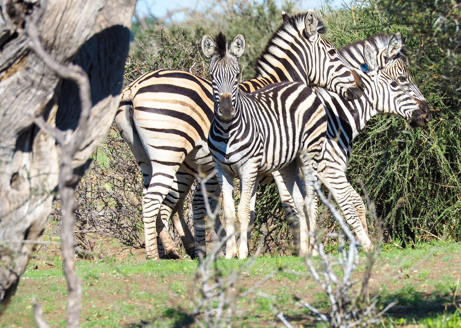 zebra-wilderness-south-africa-botswana-guided-mountain-bike-trip-cycling-holidays.jpg - NEW! South Africa and Botswana - Mountain Biking