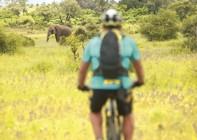 South Africa & Botswana - Guided Mountain Bike Holiday Image