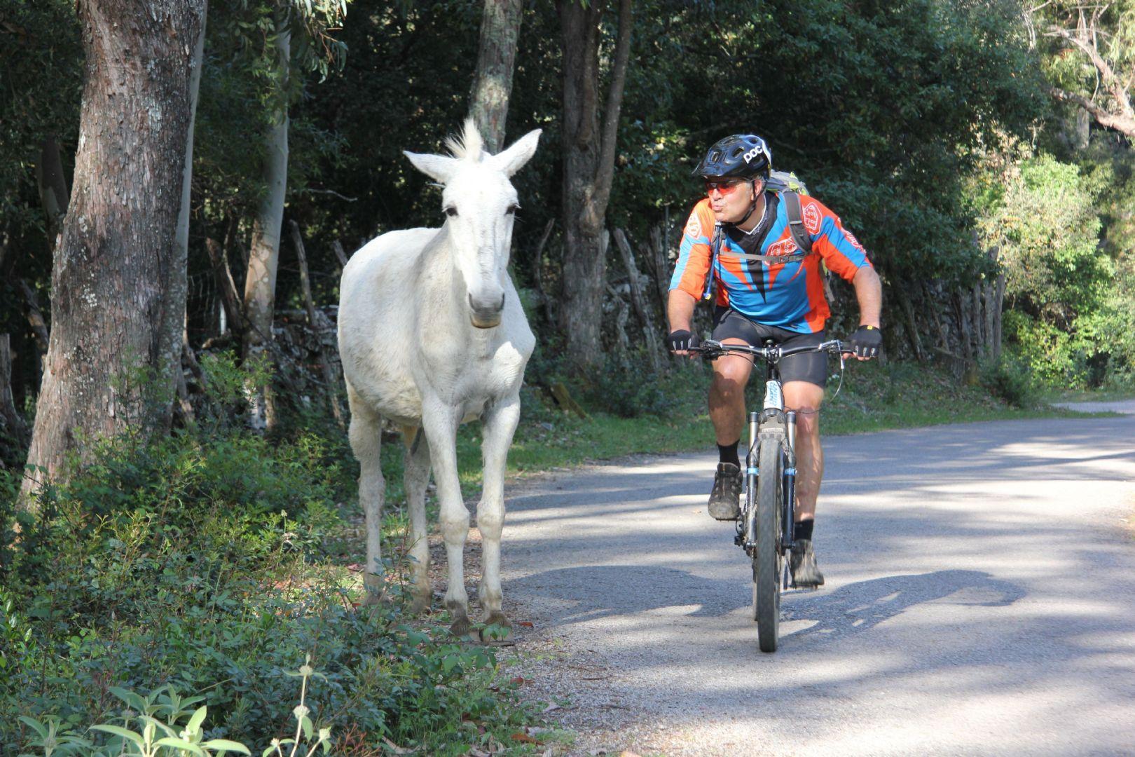 IMG_9208.JPG - Spain - Trans Andaluz - Guided Mountain Bike Holiday - Mountain Biking