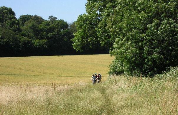 UK - Chilterns - Guided Mountain Bike Weekend - Mountain Biking
