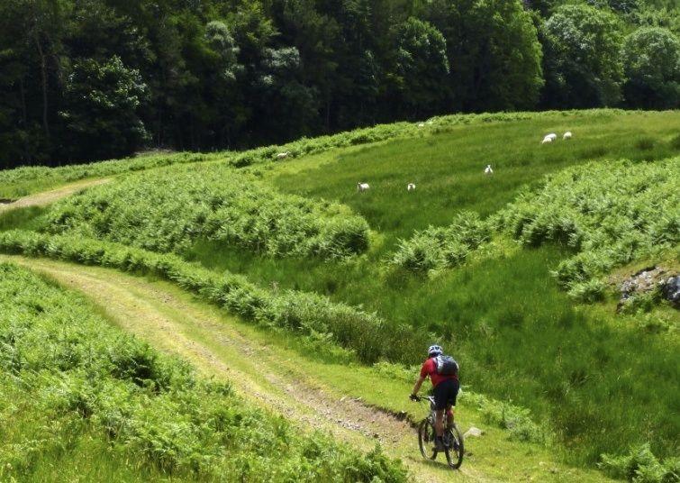 Standstoneway10.jpg - UK - Northumberland - Sandstone Way - Mountain Biking