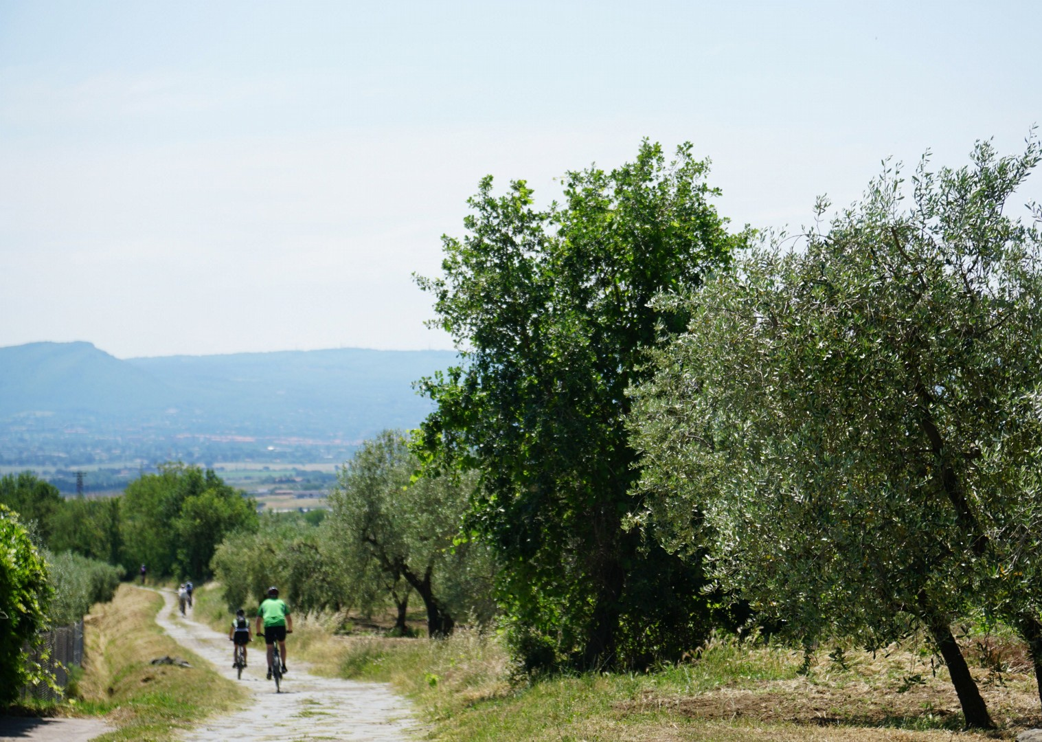 35875669755_20e8ea84fa_o.jpg - Italy - Via Francigena (Tuscany to Rome) - Mountain Biking