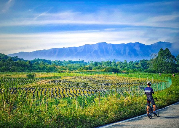 road-borneo-holiday-cycling-saddle-skedaddle-with-guides.jpg