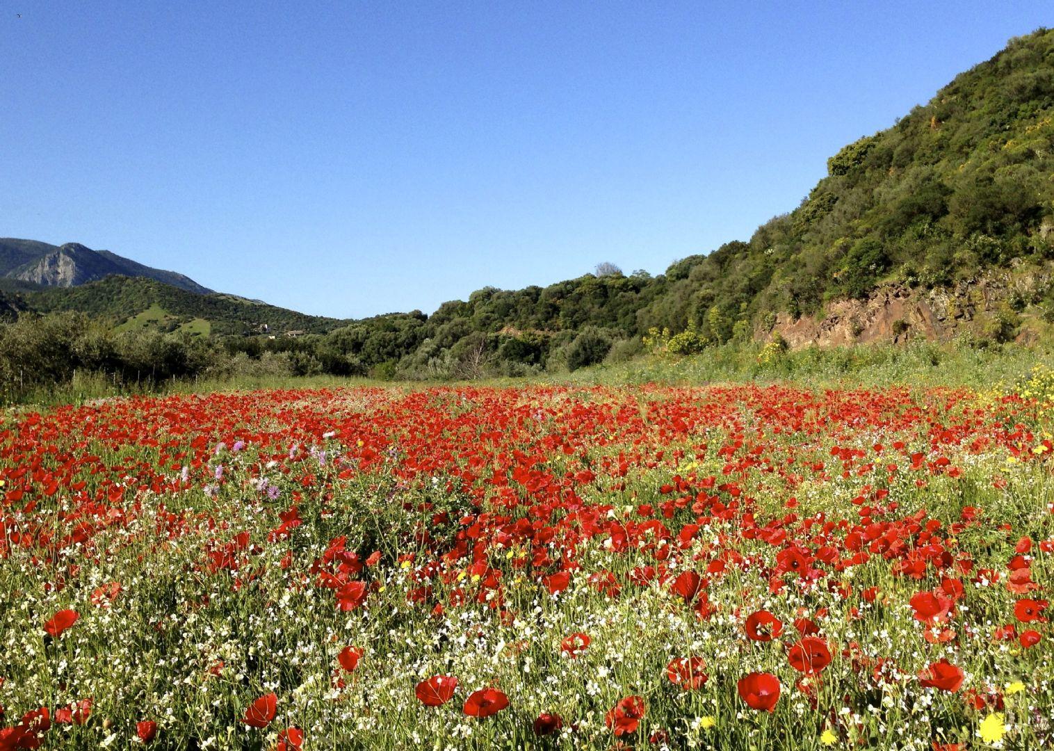 _Customer.86943.9734.jpg - Italy - Sardinia - Coast to Coast - Self-Guided Road Cycling Holiday - Road Cycling