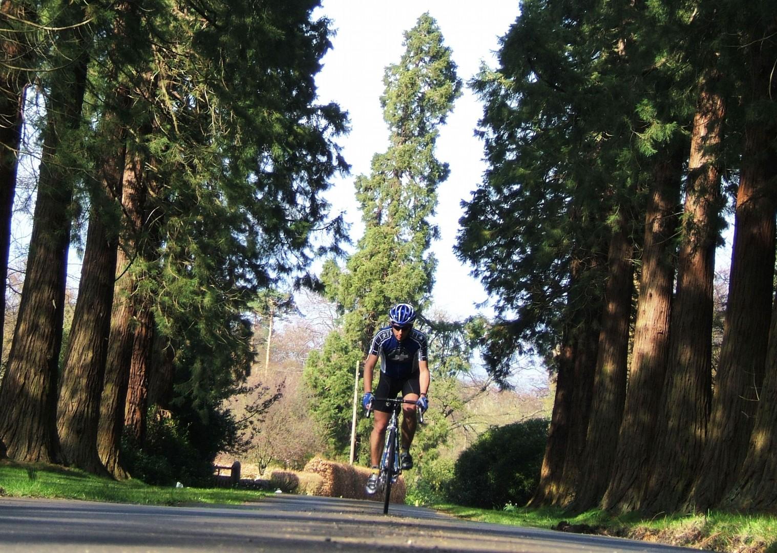 northumberland-woodland-cycling.jpg - UK - Northumberland - Road Cycling