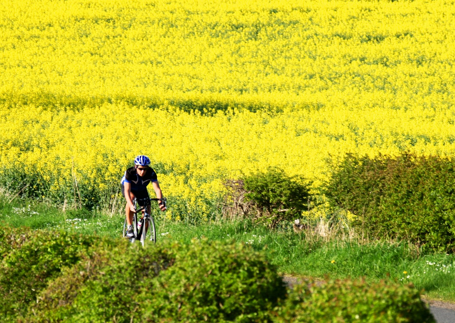 northumberland-guided-road-cycling.jpg - UK - Northumberland - Road Cycling