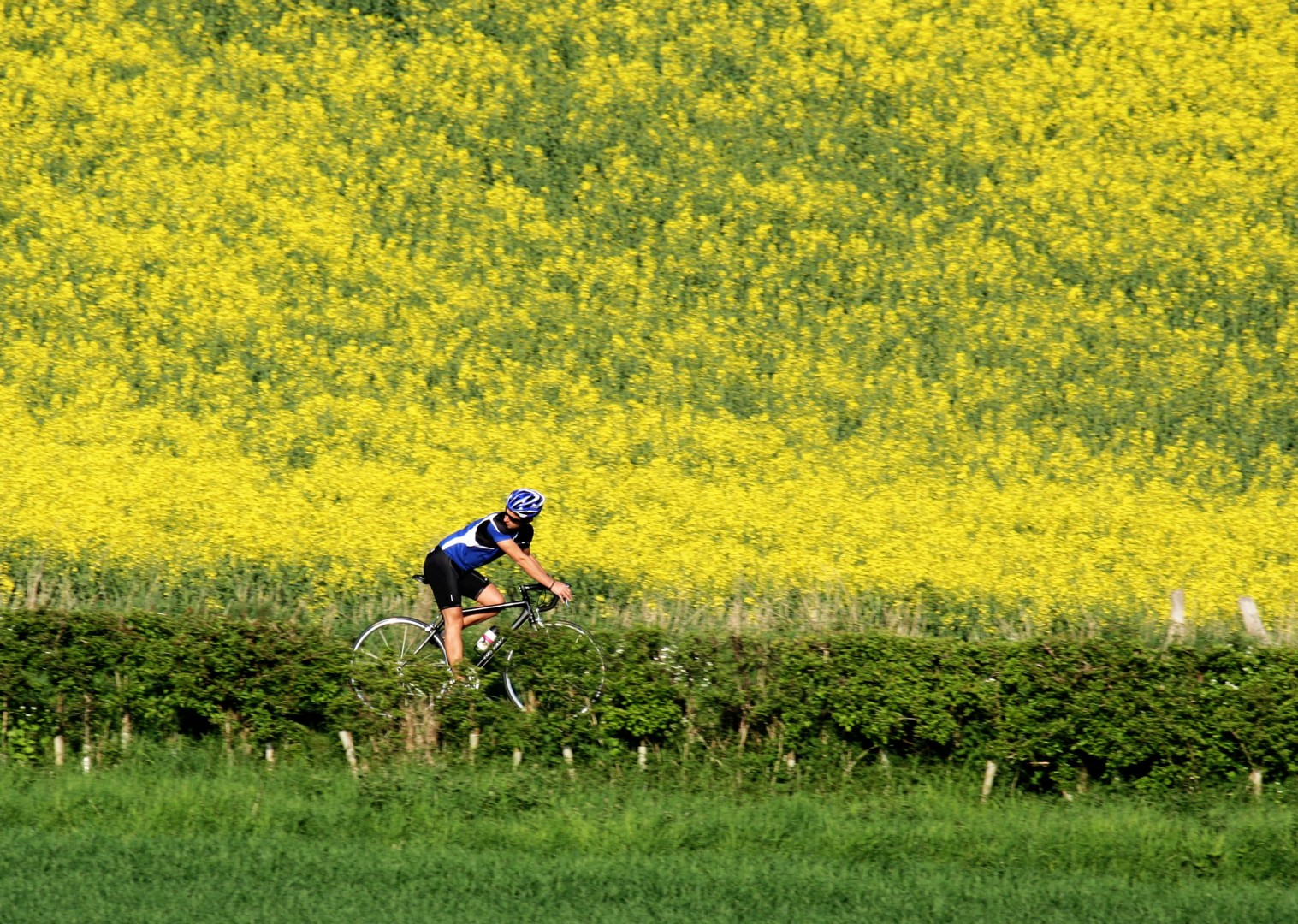 uk-cycling-guided.jpg - UK - Northumberland - Road Cycling