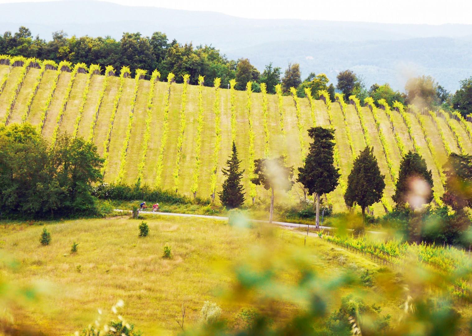cycling-vineyards-tuscany-italy-holiday.jpg - Italy - Tuscany Tourer - Guided Road Cycling Holiday - Road Cycling