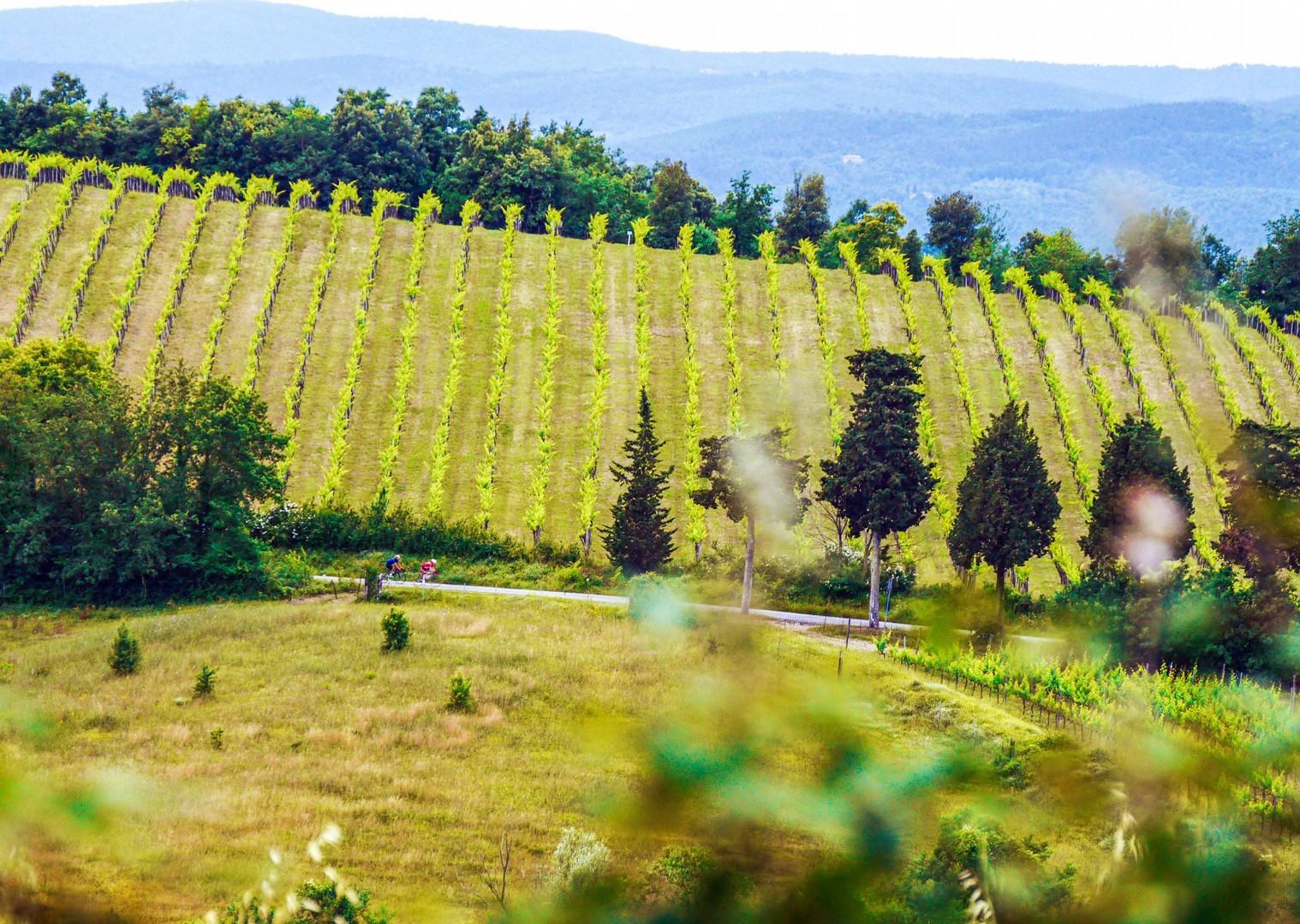 Riding through the vineyards.jpg - Italy - Tuscany - Giro della Toscana - Guided Road Cycling Holiday - Road Cycling