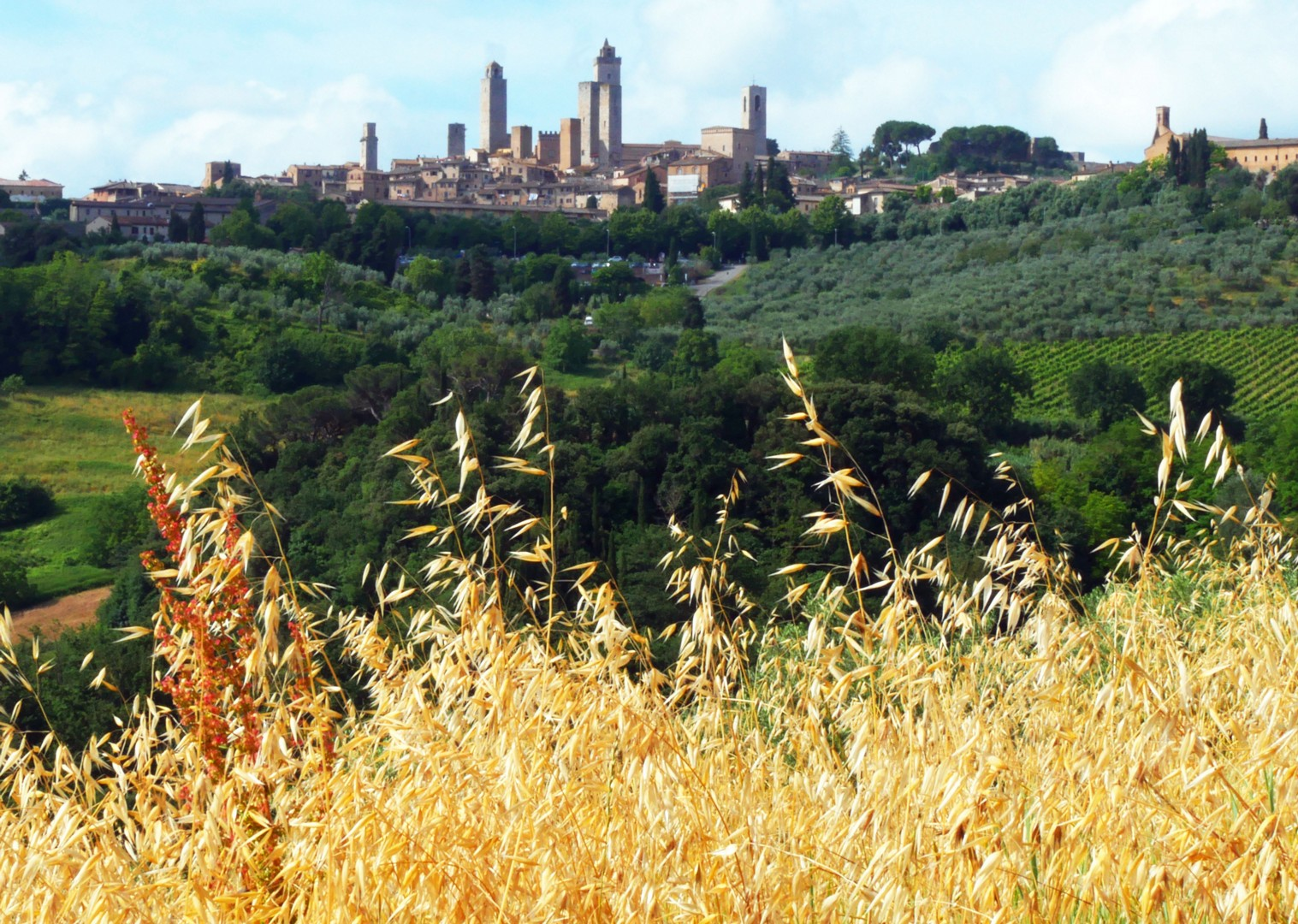san-gim-corn-field-tuscany-cycling.jpg - Italy - Tuscany Tourer - Self Guided Road Cycling Holiday - Road Cycling