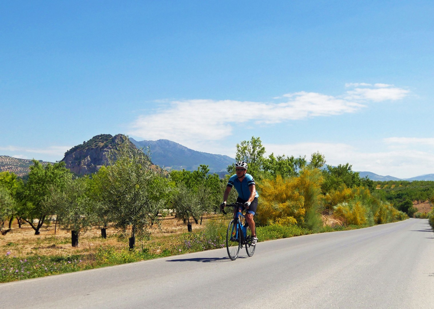 olive-groves-road-cycling-holiday-spain.jpg - Spain - Basque Country to Andalucia - North to South - 16 Day - Guided Road Cycling Holiday - Road Cycling