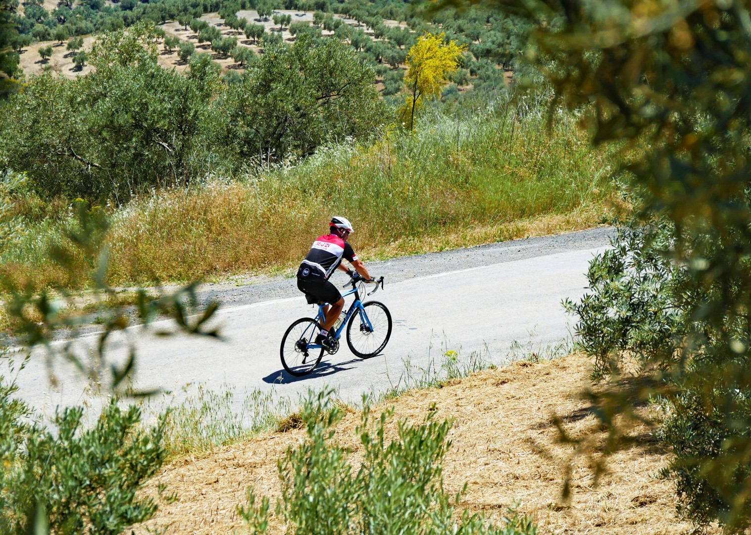 road-cycling-through-olive-groves-andalucia.jpg - Spain - Del Norte al Sur - Basque Country to Andalucia - Guided Road Cycling Holiday - Road Cycling