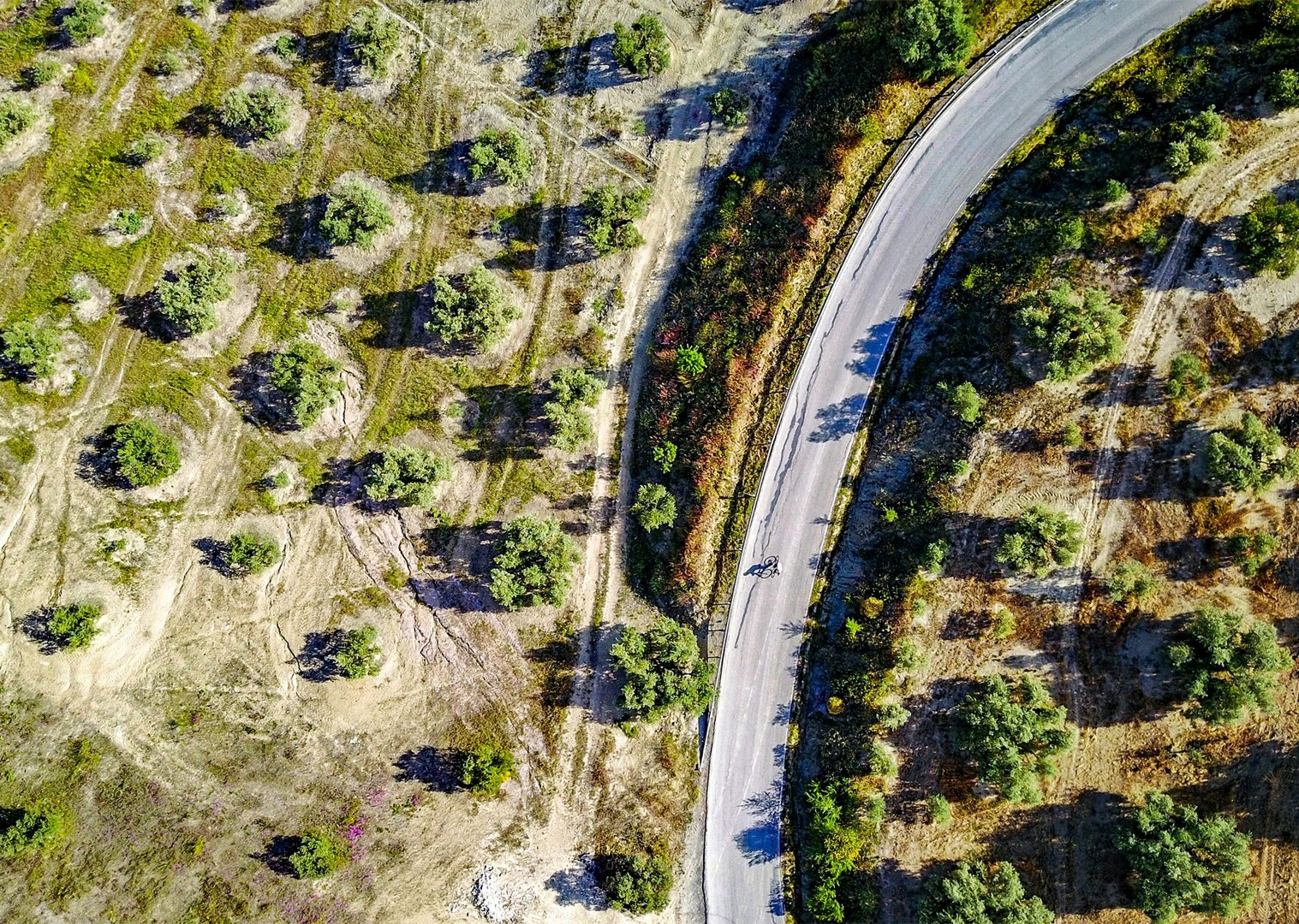 cycling-through-olive-groves-spain-road-cycling-holiday-north-to-south.jpg - Spain - Basque Country to Andalucia - North to South (16 Days) - Guided Road Cycling Holiday - Road Cycling