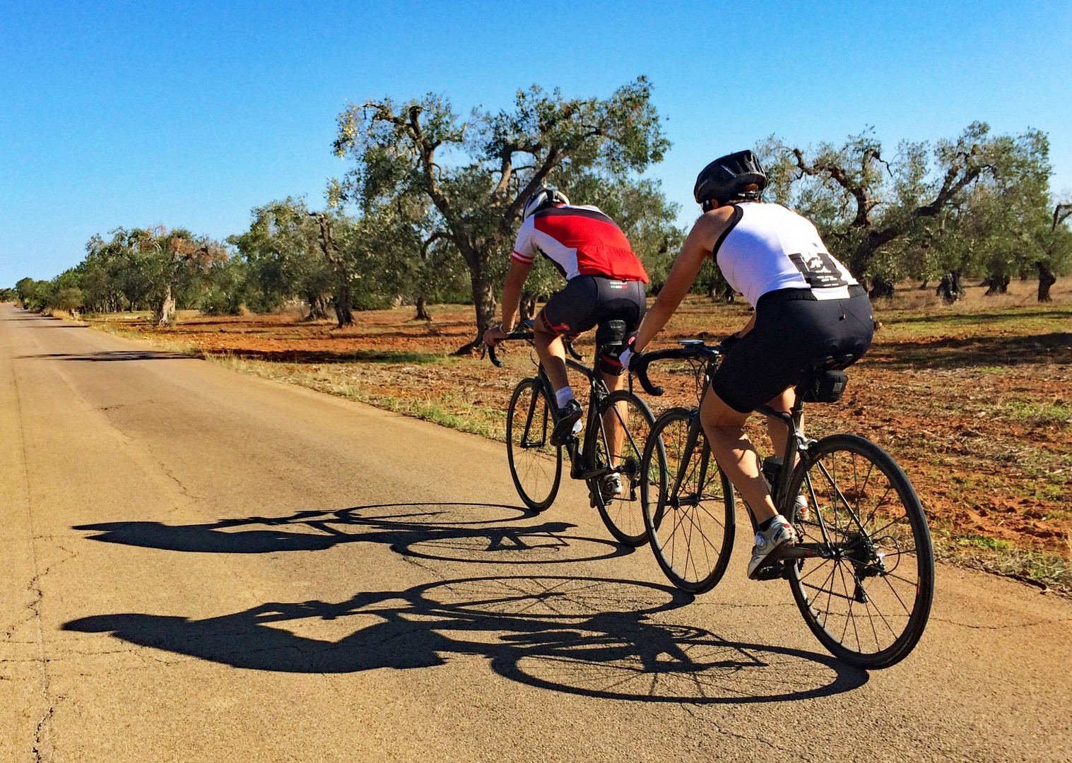 ride-through-olive-groves-guided-cycling-trip.jpg - Italy - Grand Traverse - South to North (22 days) - Guided Road Cycling Holiday - Road Cycling