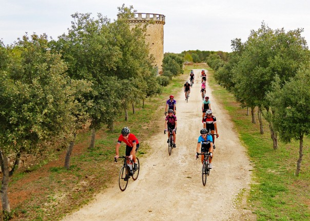Riding through the olive groves at Masseria Cocciola2.jpg - Italy - Grand Traverse - South to North (22 days) - Guided Road Cycling Holiday - Road Cycling