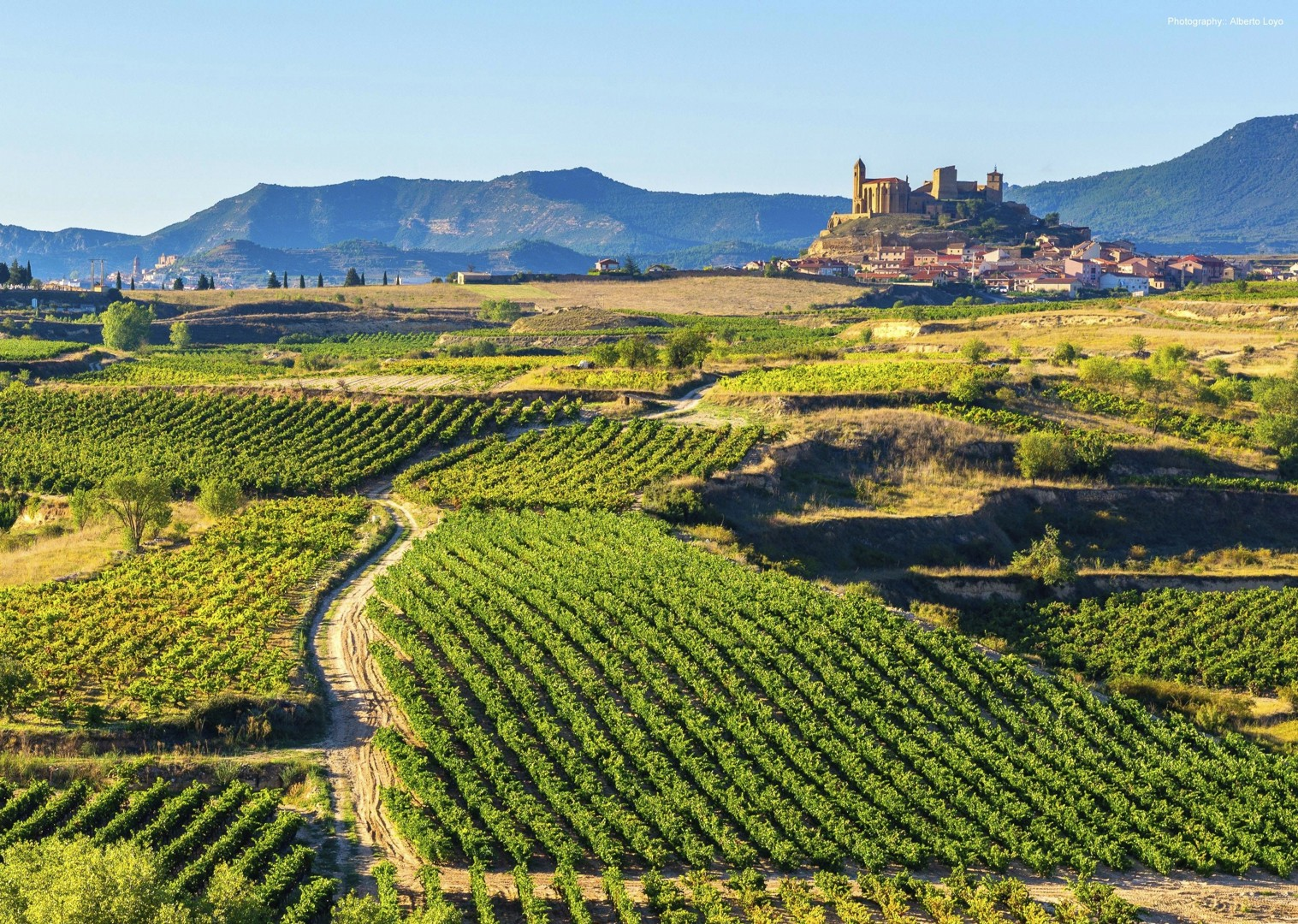 402732421La-Rioja-Alberto-Loyo.jpg - Northern Spain - Rioja - Ruta del Vino - Guided Road Cycling Holiday - Road Cycling