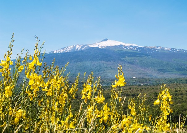 Etna flowers.jpg - NEW! Italy - Sicily - 2018 Giro Special - Road Cycling
