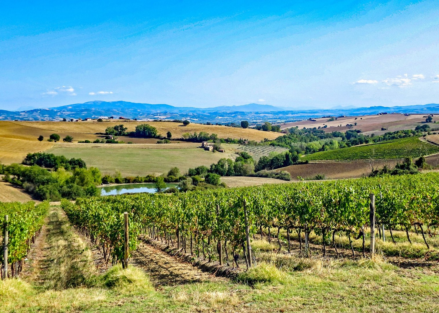 umbria-vineyard-cycling-italy-guided-road-holiday-saddle-skedaddle.jpg - NEW! Italy - Coast to Coast - L'Adriatico al Tirreno - Road Cycling