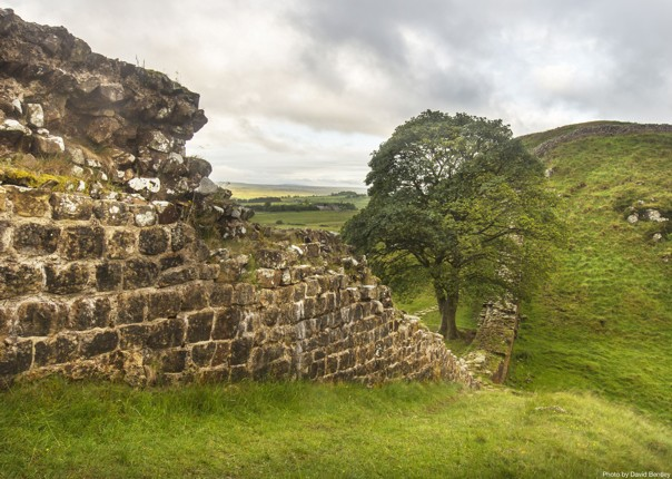 Hadrians-Cycleway-Sycamore-Gap-Supported-Leisure-Cycling-Holiday.jpg