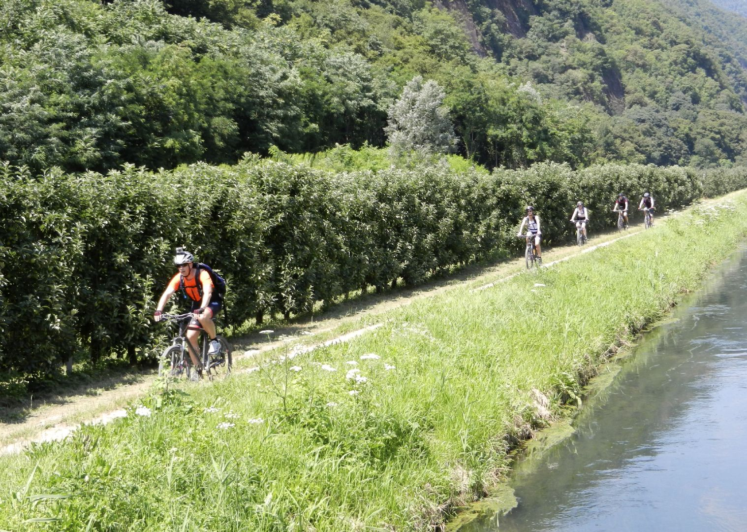 cycling-holiday-in-germany-and-austria-danube - Germany and Austria - The Danube Cyclepath (8 Days) - Self-Guided Leisure Cycling Holiday - Leisure Cycling