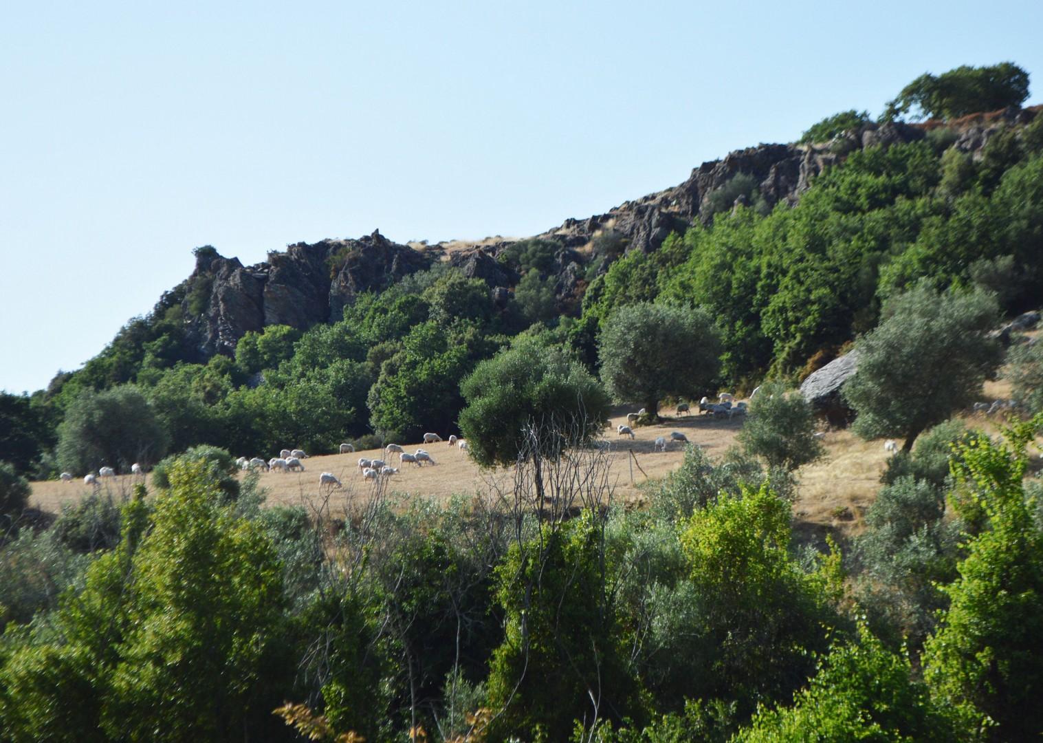 mari-emi-sardinia-leisure-cycling-holiday.jpg - Italy - Sardinia - West Coast Wonders - Self-Guided Leisure Cycling Holiday - Leisure Cycling