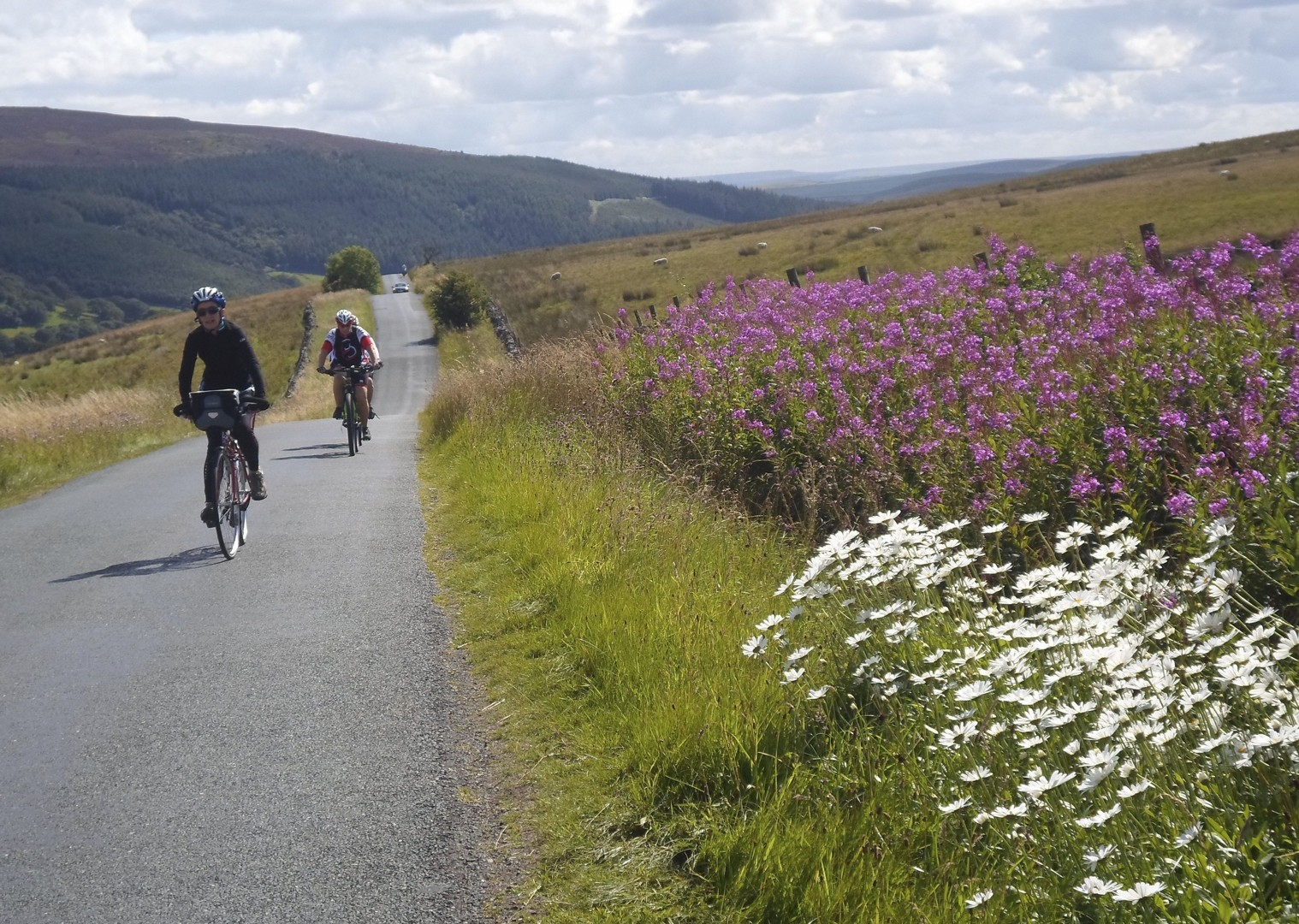 leisure-cycling-holiday-way-of-roses-landscape-nature.jpg - UK - Way of the Roses - Supported Leisure Cycling Holiday - Leisure Cycling