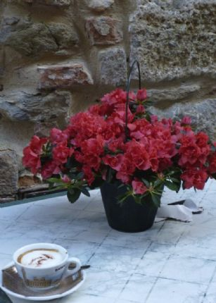 HFcyclingtuscany4.jpg - Italy - Classic Tuscany - Self-Guided Leisure Cycling Holiday - Leisure Cycling