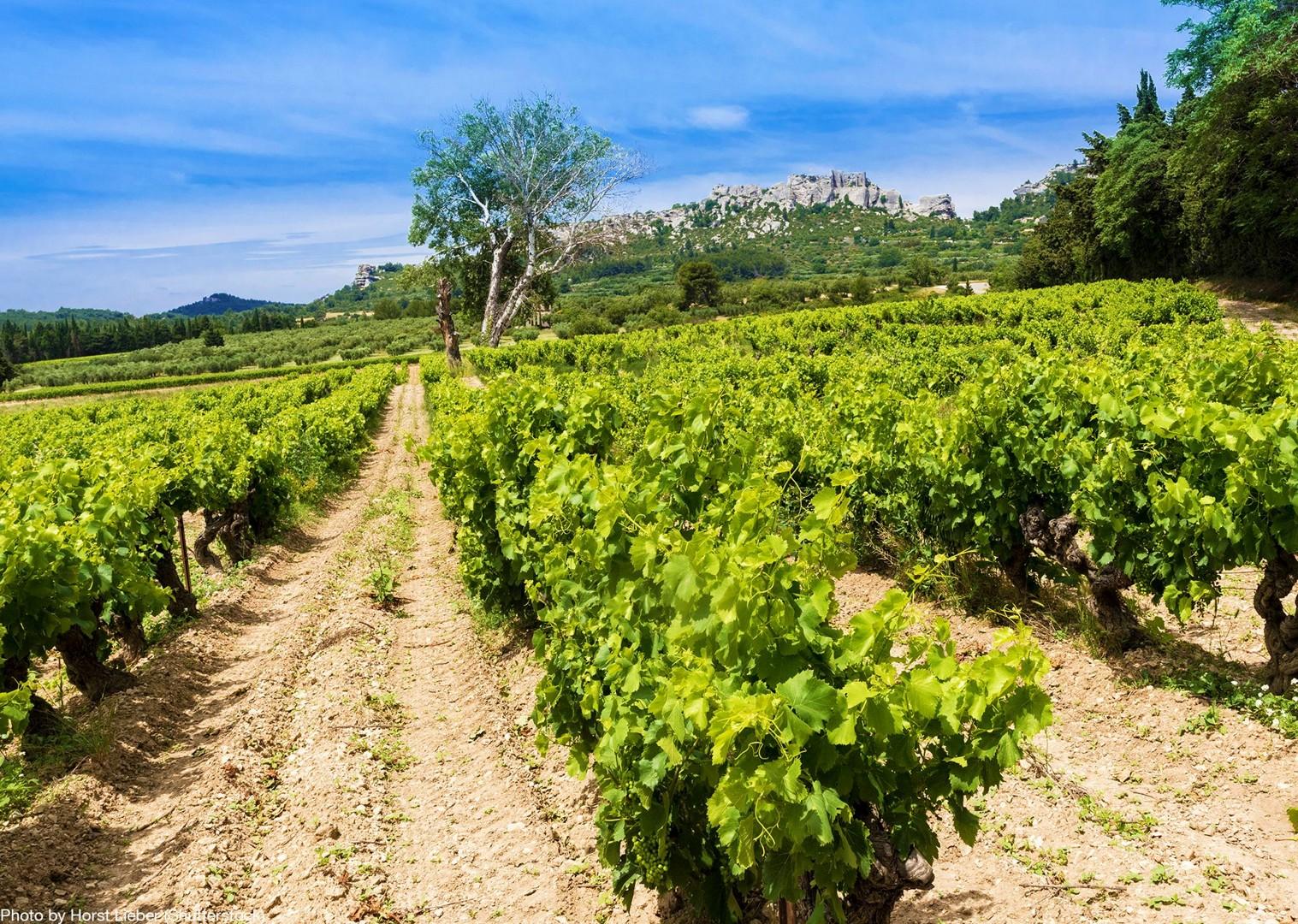 vineyards-of-côte-du-rhône-and-les-baux-wine-sampling-self-guided-provence-france.jpg - France - Provence - Self-Guided Leisure Cycling Holiday - Leisure Cycling