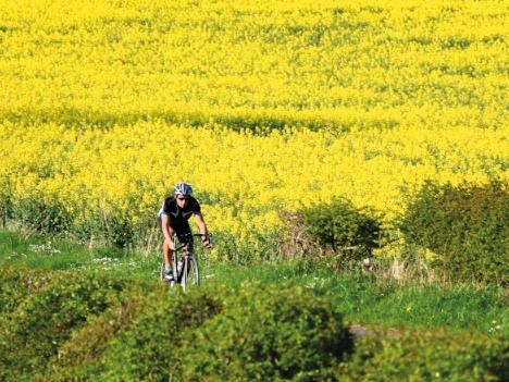 UK - Cotswolds - Bourton-on-the-Water - Self-Guided Leisure Cycling Holiday - Leisure Cycling