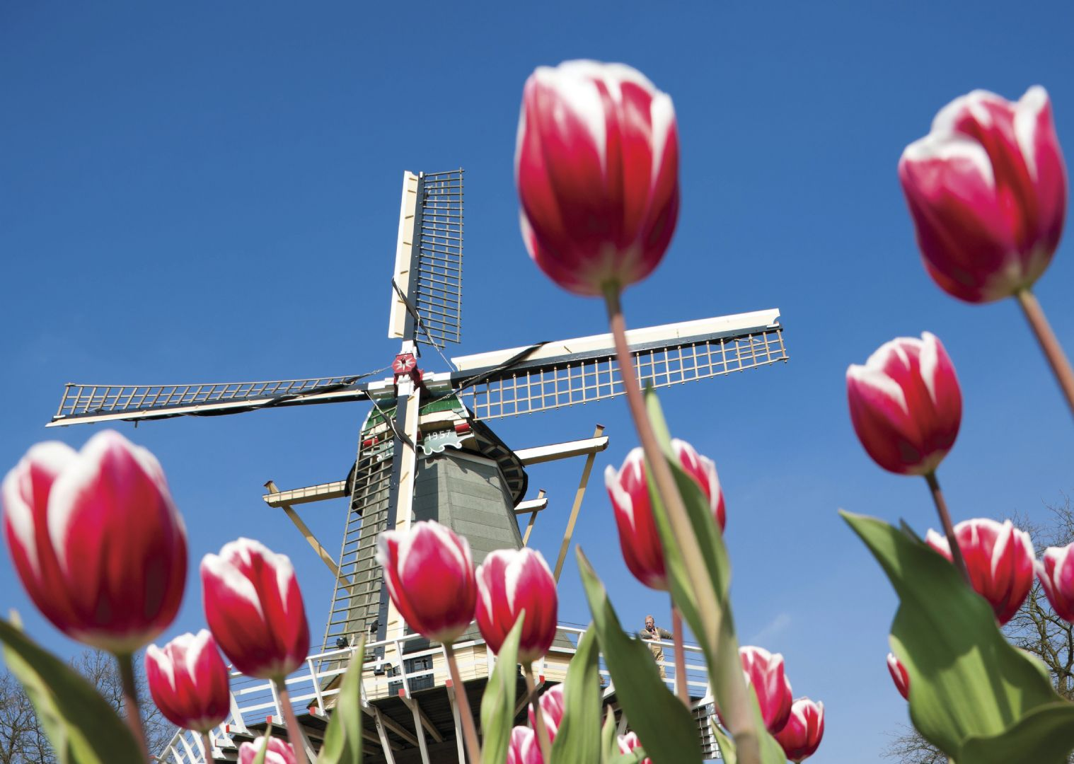 HFhollandcycling3.jpg - Holland - The Tulip Tour - Bike and Barge Holiday - Leisure Cycling