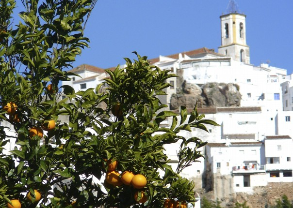 leisure-cycling-holiday-las nieves.jpg - Southern Spain - Granada to Seville - Guided Leisure Cycling Holiday - Leisure Cycling