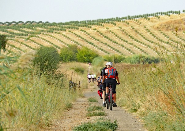 andalucia-cycling-holiday-in-spain-granada-seville.jpg - Southern Spain - Granada to Seville - Guided Leisure Cycling Holiday - Leisure Cycling