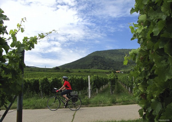 Germany and France - The Rhine Valley - Self-Guided Leisure Cycling Holiday Image