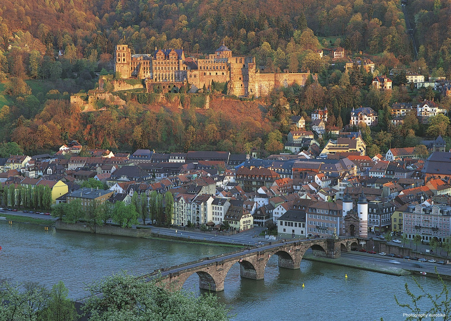 cycling-holiday-leisure-rhine-radweg-strassburg-mainz-heidelberg.jpg - Germany and France - The Rhine Valley - Self-Guided Leisure Cycling Holiday - Leisure Cycling